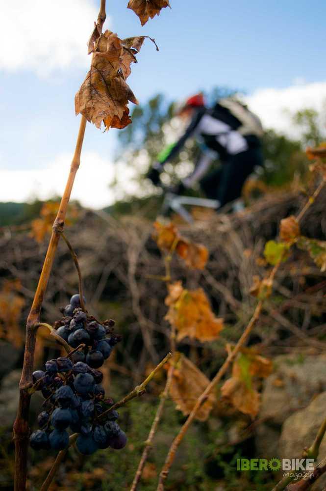 ruta en bici, castañar, otoño, el tiemblo, avila, mtb, ciclismo, btt