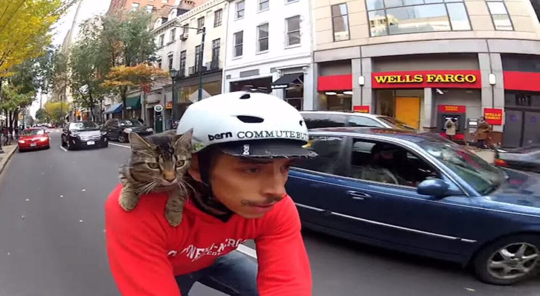 en_bicicleta-Con-gato2