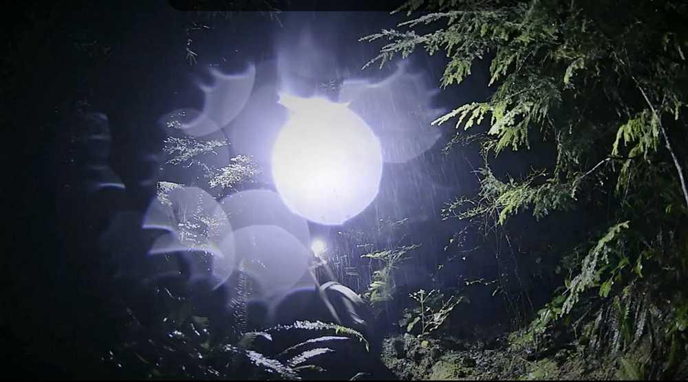 halloween_brett_tippie_nocturna