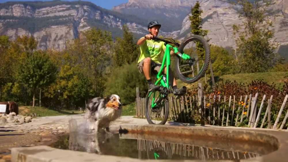 mountain-bike-perro-mascota