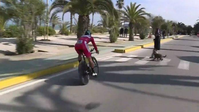 Vídeo Peter Sagan esquiva a una mujer y su perro en la crono de la Tirreno Adriático