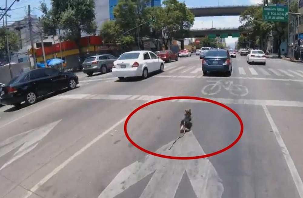una ciclista salva a un perro de ser atropellado