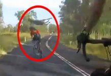 Vídeo Una ciclista es atropellada por un canguro en Queensland, Australia