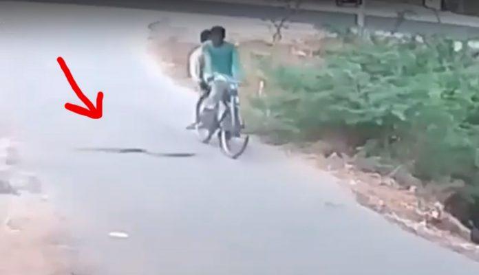 serpiente ataca a un ciclista