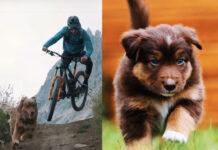 video-pezuñas-y-ruedas-perro-bicicleta-traildog-Vídeo-Balu-el-perro-aventurero-amante-del-Enduro-en-mountain-bike