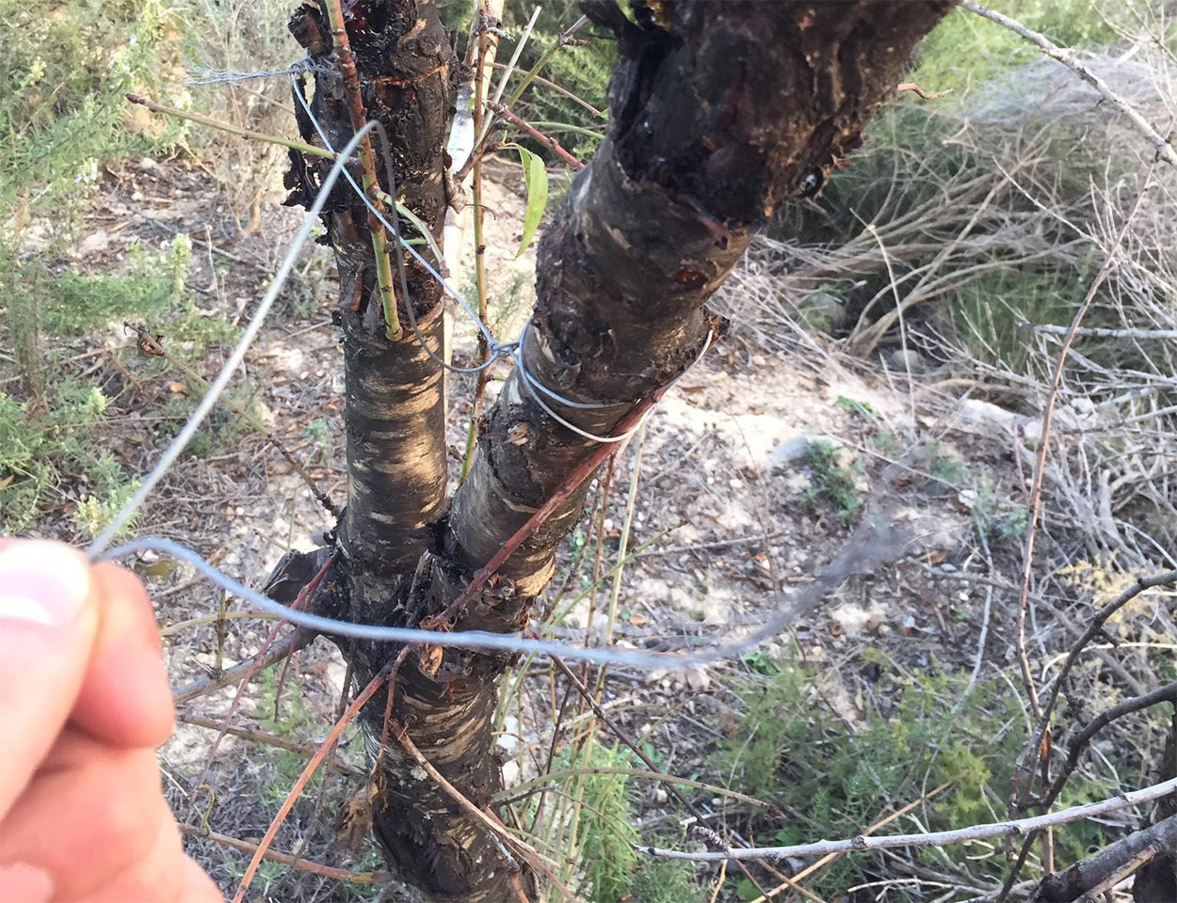 Una-peligrosa-trampa-mortal-para-ciclistas-de-montaña-detectada-en-Castellón