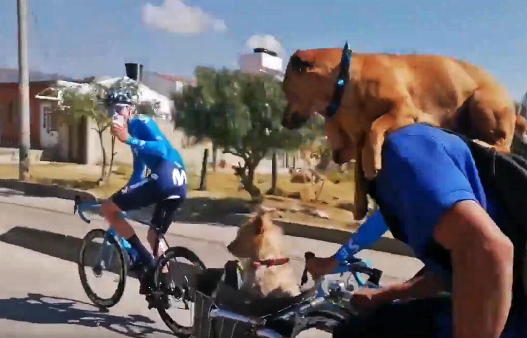 Vídeo-Ciclistas-del-Movistar-Team-grabando-con-el-móvil-a-unos-perros-en-march