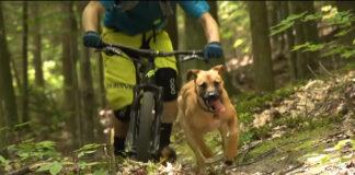 """Impresionantes imágenes de perros """"ciclistas"""" bajando a gran velocidad con sus dueños en bicicleta"""