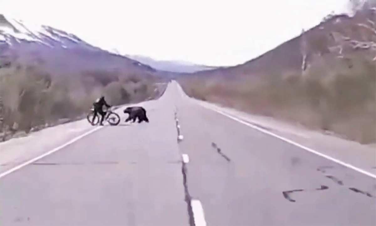 Vídeo: Se defiende con su bicicleta del ataque de un oso