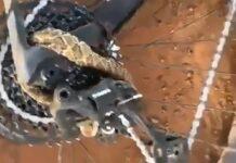 Vídeo: Se le enrolla una serpiente en los cambios de la bicicleta