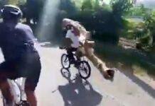 Vídeo-Espectacular-un-campesino-en-bicicleta-transportando-un-gran-tronco-a-la-espalda