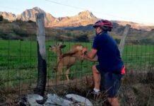 Vídeo: Un ciclista rescata a un corzo atrapado en una valla en el Parque Natural de Babia y Luna