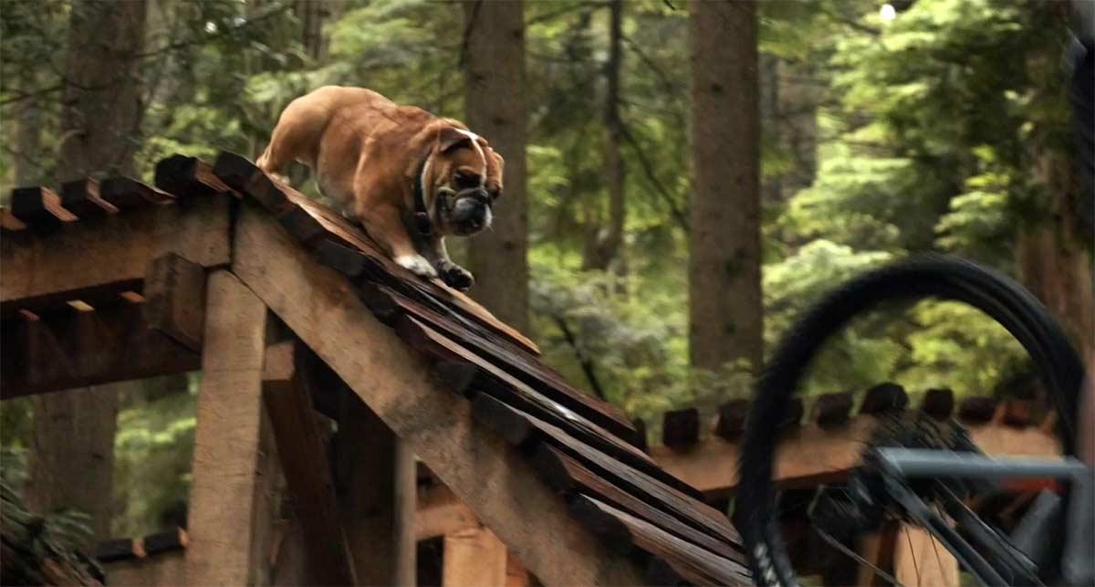 El mejor vídeo de perros ciclistas adoptados que podrás ver
