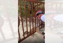 Vídeo: Dos ciclistas rescatan un corzo atrapado en una verja de hierro