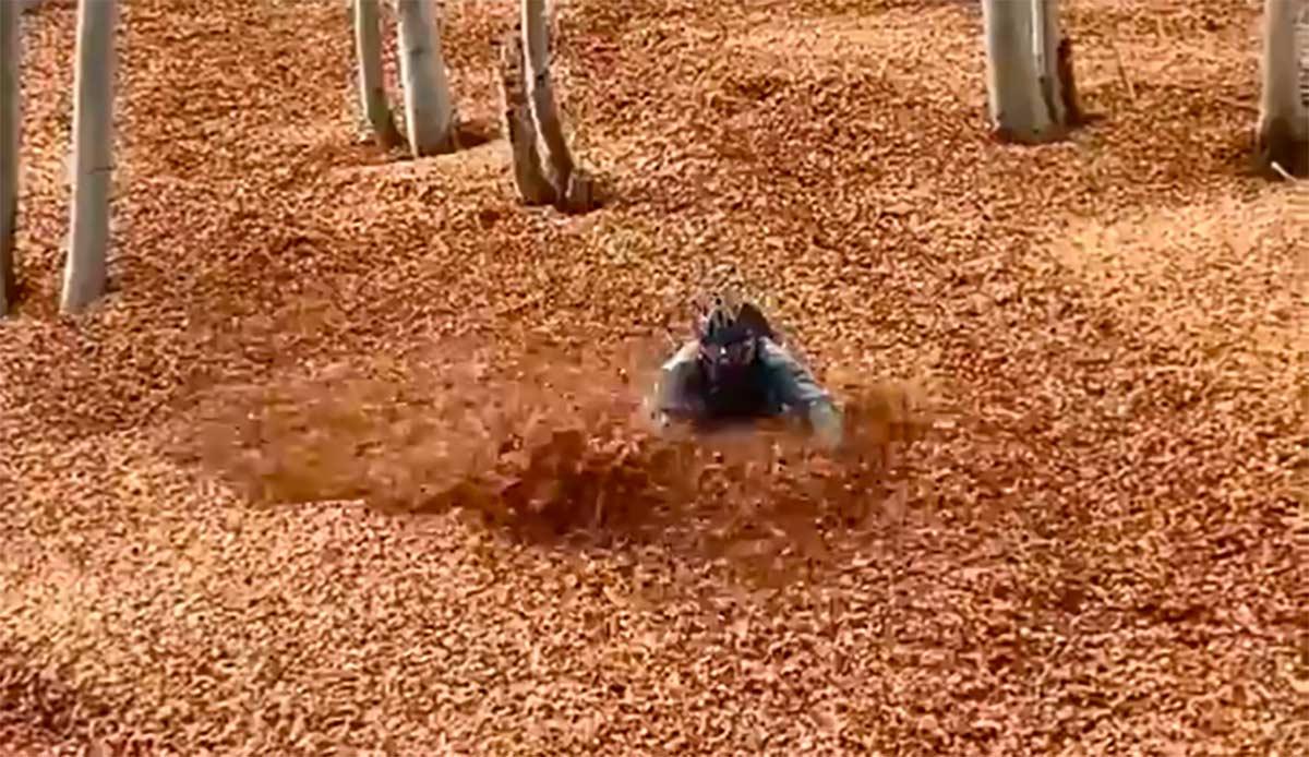Video-Se-sumerge-en-un-mar-de-hojas-caidas-con-su-bicicleta