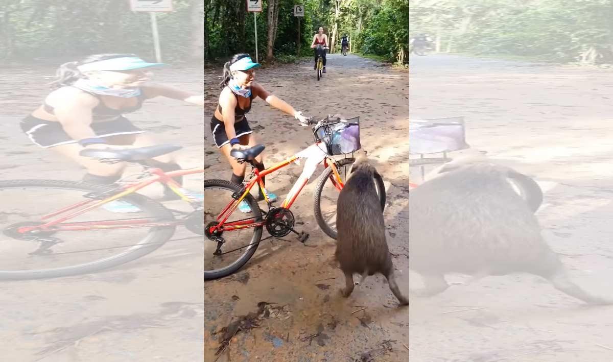 Video-Un-jabali-le-roba-la-comida-a-una-ciclista.-Titulo-de-la-pelicula-croissant-curasan-croasan