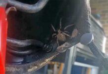 Vídeo: ¡Hay una araña debajo de mi sillín de mi bicicleta!