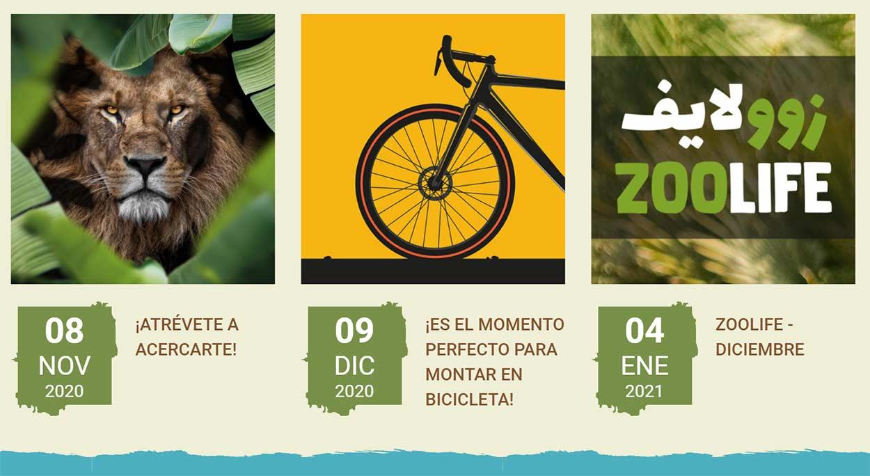 Visitar un safari en bicicleta es posible