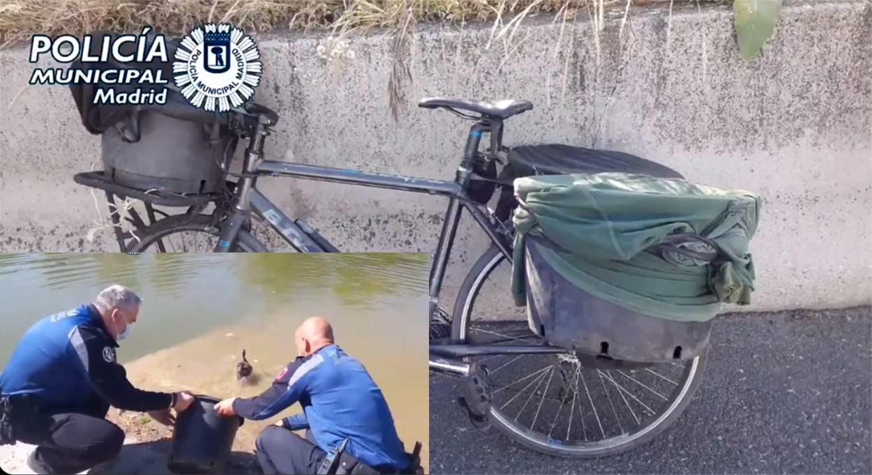 En-bicicleta-por-la-M-30-con-auriculares-y-con-9-patos-robados-en-la-Casa-de-Campo-de-Madrid