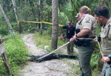 Un ciclista ha sido atacado por un caimán tras caerse de la bicicleta