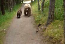 Un oso mata a una ciclista que hacía Bikepacking junto a su hermana y una amiga